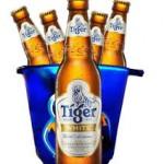 tiger-white