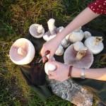 gljive-razne