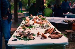 zelenkovac-gljive-na-stolu