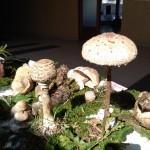 gljive-05