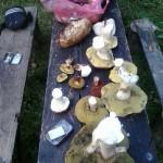 gljive-zelenkovac