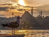ISTANBUL seagull-2135533_1920